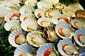 Whole Scallops on Open Shell; Fish Market; Venice Italy