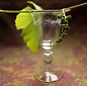 Young Grapes on Antique Wine Glass