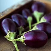 Baby Eggplants in Wooden Box