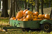 Pumpkins in a Trailer; Outdoors