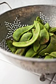 Fava Beans in a Metal Colander