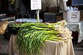 Green Garlic Stalks on Table at Farmer's Market
