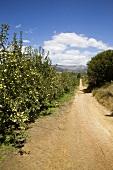 Apfelplantage in Melsetter Trust Estate, Südafrika