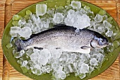 Whole Fresh Brook Trout on Ice on Platter