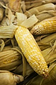 Corn on the Cob Cooked in Husks