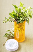 Fresh Herbs in a Pill Bottle (Natural Remedy)