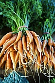 Bunches of Organic Baby Carrots