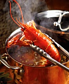 Removing Boiled Lobster From Copper Pot with Tongs