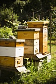 Bee Apiary (Bee Yard)