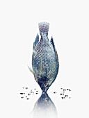 Blauer Fisch mit Reflexion