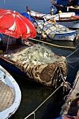 Fishing Boats in Water; Foca, Turkey