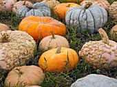Variety of Pumpkins in the Grass