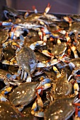 Many Fresh Blue Crabs