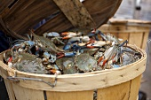 Basket of Fresh Blue Crab