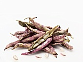 New Jersey Grown Cranberry Beans; White Background