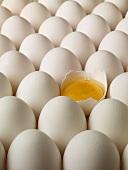 Viele weisse Eier, eines davon aufgeschlagen