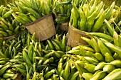 Bushels of Corn on the Cob