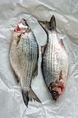 Two Whole White Bass on Butcher's Paper