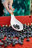 Woman Using a Spoon to Select Blueberries at a Farmer's Market