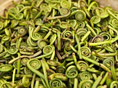Fiddlehead Ferns at Farmer's Market in Seattle Washington