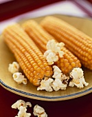 Dried Corn Cobs with Popcorn