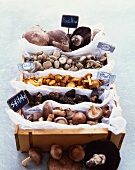 Variety of Mushrooms in a Box with Labels