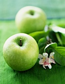 Two Granny Smith Apples with Branch and Blossoms