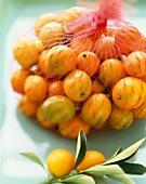 Kumquats in a Plastic Mesh Bag