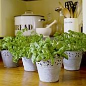 Assorted herbs in pot