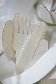 White wooden cutlery