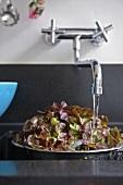 Salatblätter im Sieb unter fliessendem Wasser