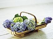 Hydrangea flowers in a wooden basket