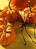 Orange pumpkins and a spider
