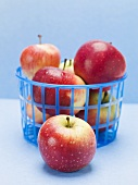 Fresh red apples in a plastic basket