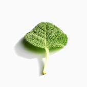 A sage leaf