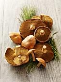 Fresh Slippery Jack mushrooms