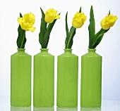 Yellow tulips in green vases