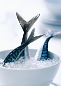 Fresh mackerels in a bowl of crushed ice