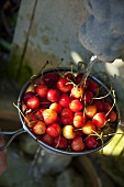 Cherries in a sieve being washed under a fountain