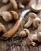 Porcini mushrooms on a wooden surface with a knife and a brush