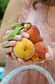 Woman holding fresh peaches in her hands