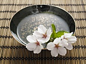 Cherry blossom in a bowl of water