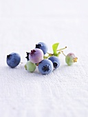 Ripe and unripe blueberries