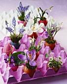 Easter flower arrangements in Easter eggs and egg boxes