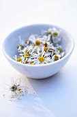 Dried chamomile flowers in a white bowl