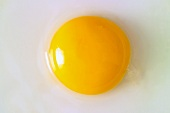 An egg yolk