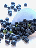 Lots of blueberries in a paper bag