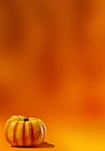 A pumpkin against an orange background