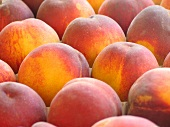 Peaches (filling the picture)