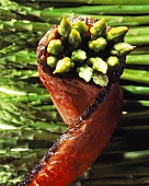 Green asparagus wrapped in slice of roast beef